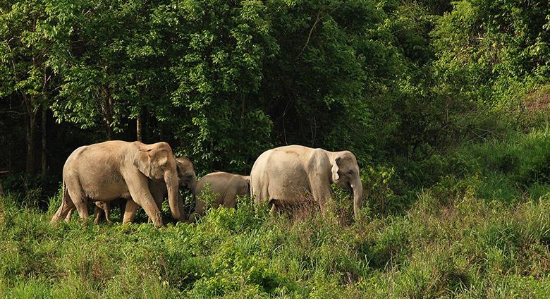 Elephants Thailande
